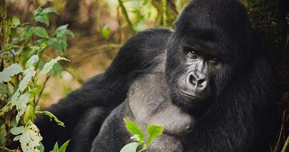 Yann Verbeke Virunga